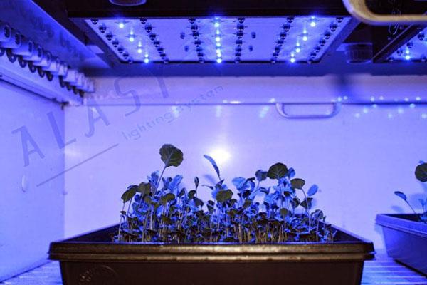 Chọn đèn nào trồng cây trong nhà